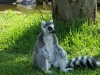 zoo-pics-for-web5-004